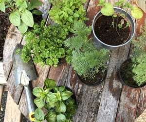 garden, healthy, and herbs image