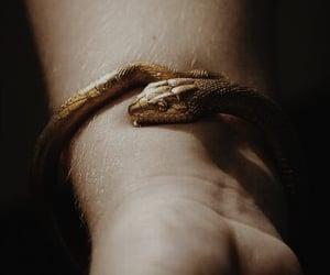 snake, bracelet, and gold image