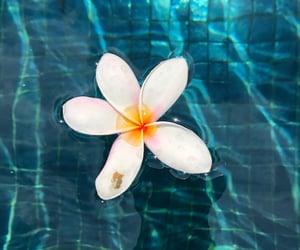 beautiful, creative, and flower image