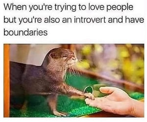funny, meme, and introvert image