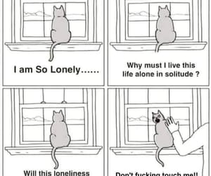 cat, funny, and alone image