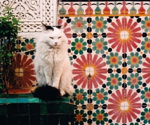 cat, indie, and animal image