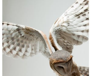 owl, aesthetic, and white image