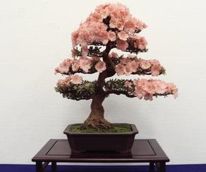 azalea, plants, and bonsai image