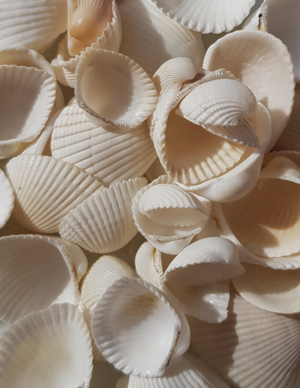 aesthetic, ocean, and shell image