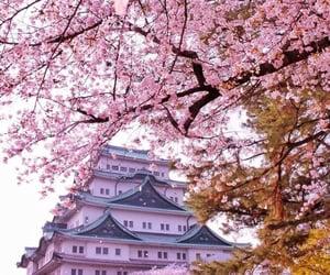 japan, landscape, and pink image