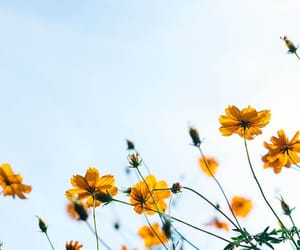 background, flower, and nature image