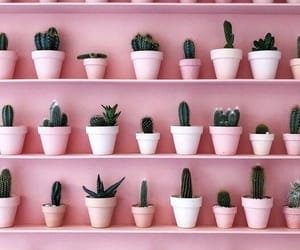 cactus and pink image