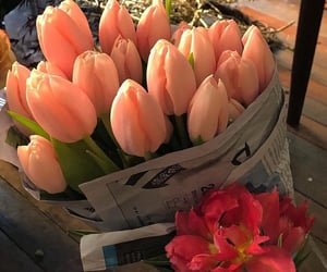 pink, beautiful, and tulips image
