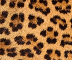 leopard, pattern, and wallpaper image