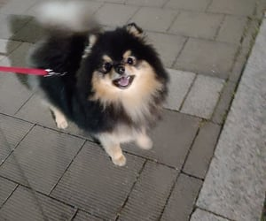 yeontan, tannie, and dog image
