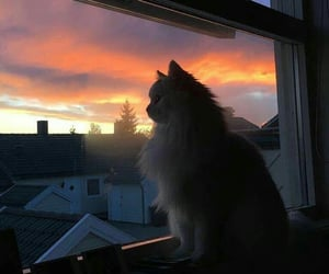 cat, cloud, and sunset image