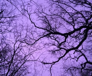 purple, tree, and aesthetic image