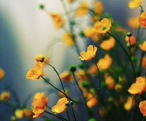 flowers, yellow, and pretty image