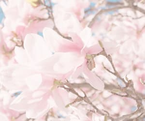 blossom, florals, and pink image