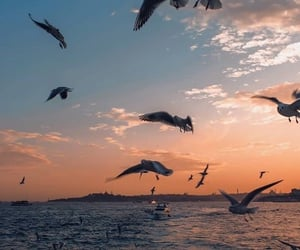 fotos, passaros, and mar image
