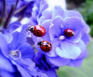 ladybird, ladybug, and violet image