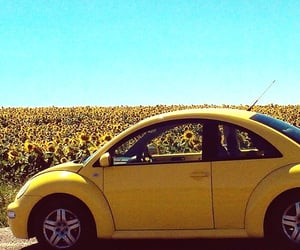 car and sunflower image