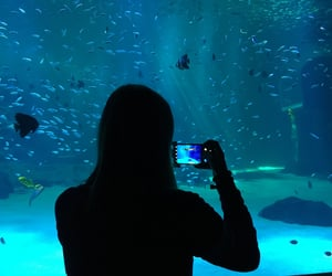 aesthetic, aqua, and aquarium image