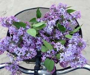 flowers, purple, and bike image