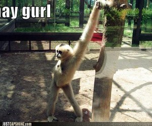 monkey, funny, and lol image