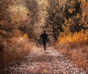 autumn, boy, and leaf image