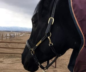animals, black, and horse image