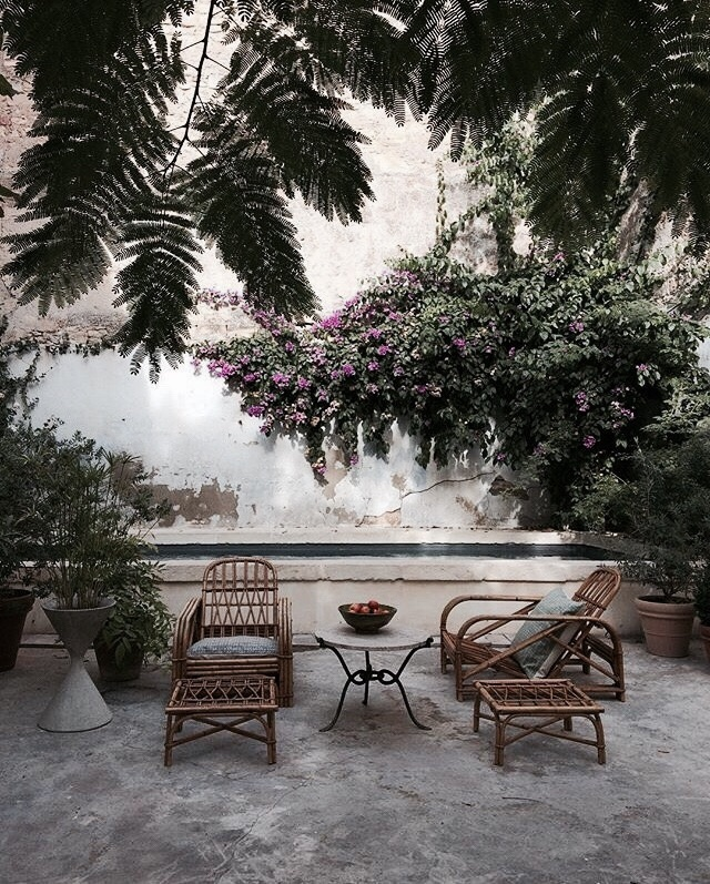 plants, flowers, and garden image