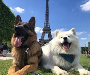 dog, dogs, and grunge image
