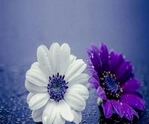 color, flowers, and purple image
