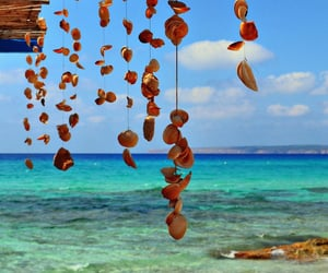 ocean, shells, and summer image