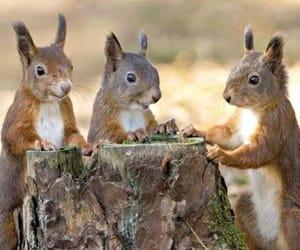 animals, squirrel, and nature image