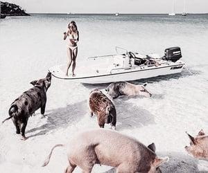 beach, summer, and beach aesthetic image