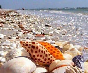 shell, beach, and beautiful image