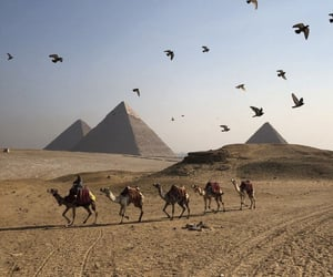 animals, birds, and egypt image