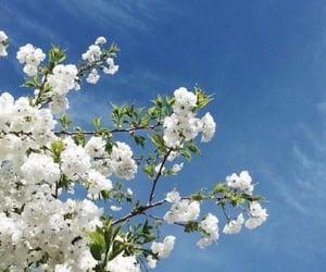 flowers, ciel, and sky image