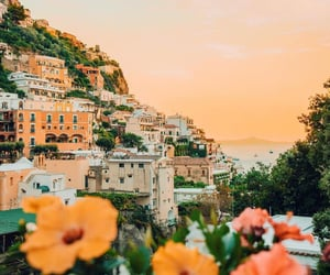 flowers, travel, and sunset image