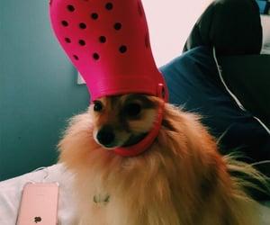 animals, cute, and crocs image