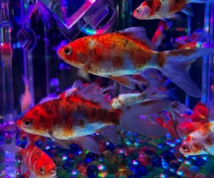 fishes, lovely, and nature image