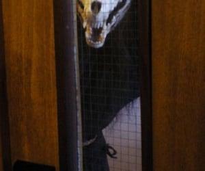 bones, creepy, and scary image