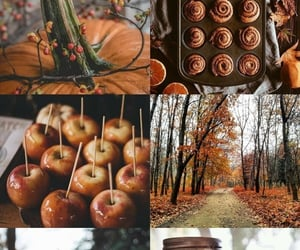 autumn, leaves, and Cinnamon image