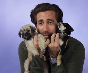 gif and jake gyllenhaal image