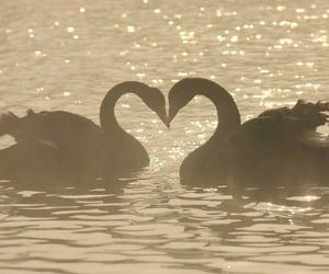 animals, love, and beautiful image
