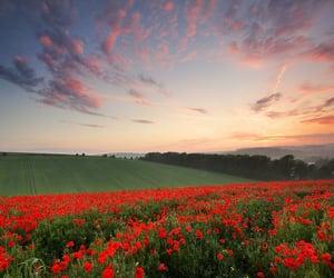 flower, REF, and landscape image
