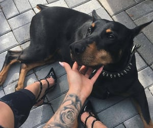 dog, tattoo, and animal image