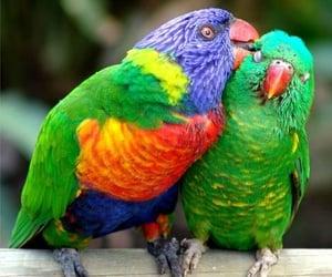 animals, australian, and jungle image