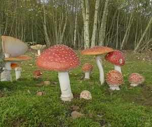 aesthetic, mushroom, and cottagecore image