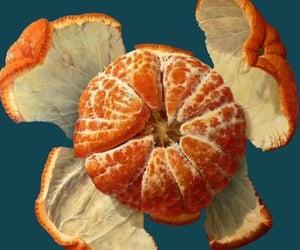 orange, art, and fruit image