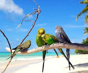 bird, beach, and parrot image
