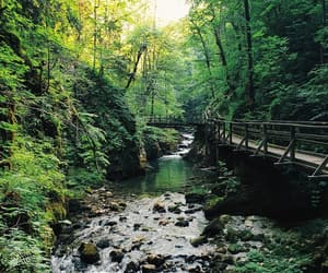 canyon, forrest, and green image